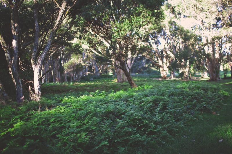 Centennial Park Bushes