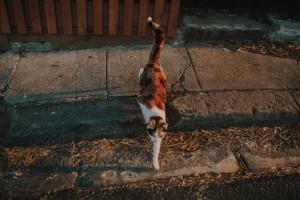 Edgecliff_streets014