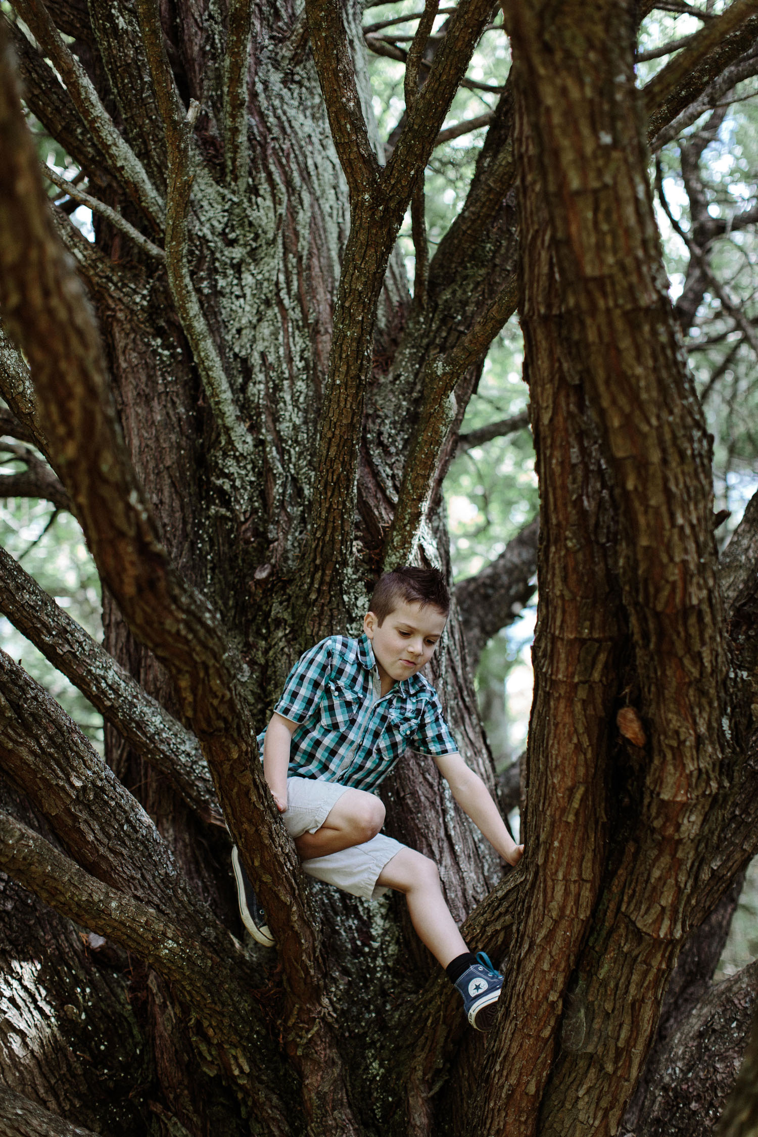 boy climbing tree at wedding