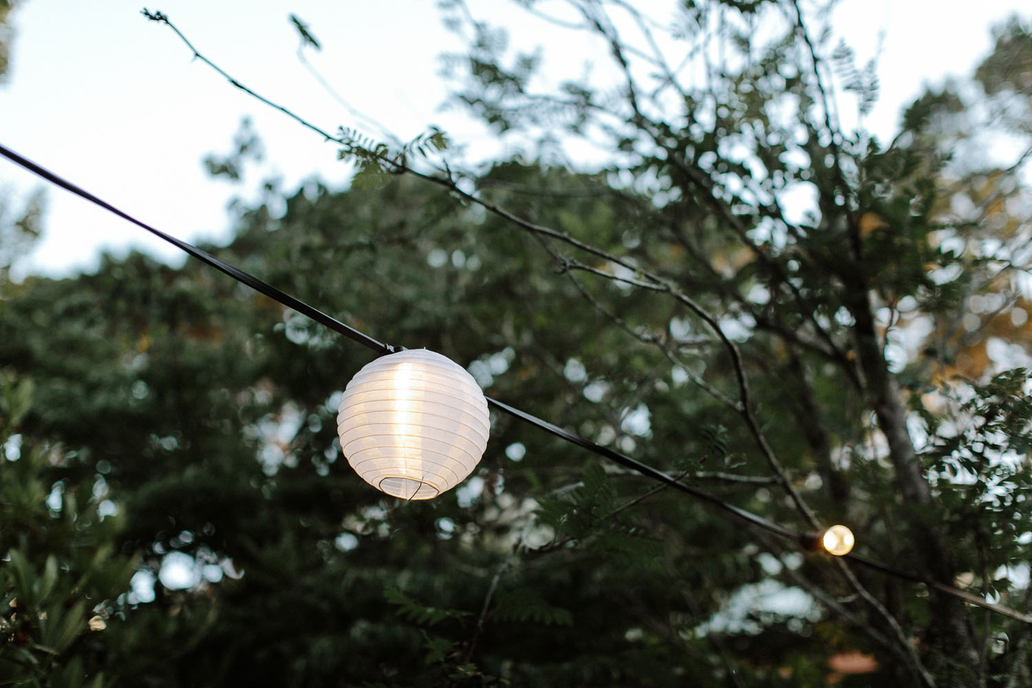 wedding chinese lantern in tree